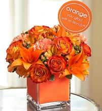 Colors of Love - Orange